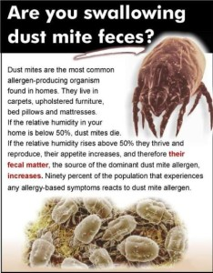 Dust mites and allergy treatments available